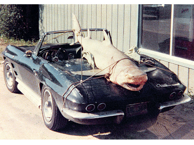 Vemp_0809_02_z 1964_chevrolet_corvette Rear_view_shark